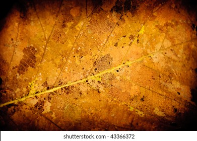 a withered and yellow  leaf