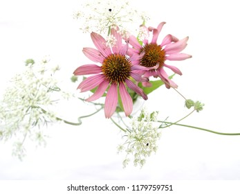 Withering echinacea flowers with umbellifer flowers in a glass on white background, seen from above, with sharp focus on echinacea pistils