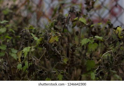 Withering wilting fading fall plants background