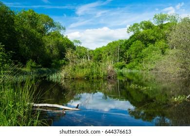 Wittenham Clumps, Thames Valley, Oxfordshire, England, United Kingdom, Europe