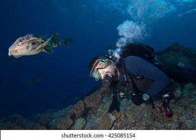 Wobbegong rare carpet shark in Indonesia while moving to a scuba diver