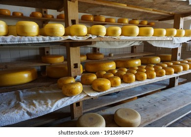Woerden, The Netherlands - April 13, 2019; The farmhouse cheeses are on shelves in the storage area to ripen