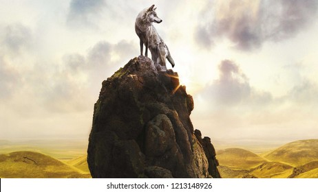 Wolf climb montain, Lonely wolf on stones