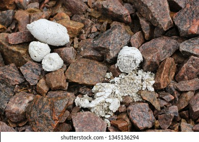 Wolf droppings in a forest