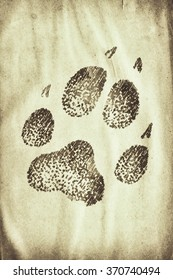 wolf footprint on the grunge paper
