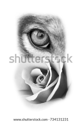 Wolf Rose Tattoo Design Stock Photo Edit Now 734131231 Shutterstock