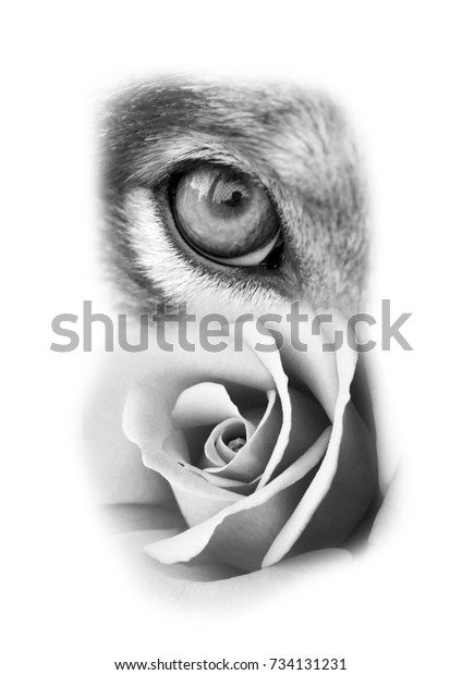 Wolf Rose Tattoo Design Stock Photo Edit Now 734131231