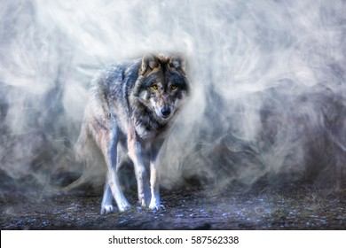 A wolf runs through the mist