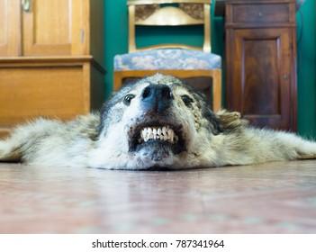 Wolf skin photo. Stuffed animal