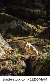 Wolf in sunshine