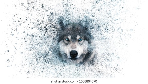 Wolf wallpaper with decay effect,