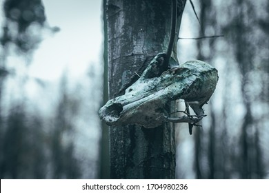 a wolf's skull hung on a tree