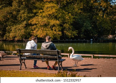 Wolverhampton, United Kingdom - September 17, 2019: Couple sitting on a bench are approached by a curious swan.