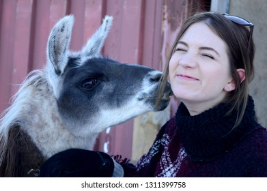 A woman accepts loving kisses from her Llama friend.