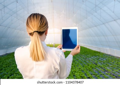 Woman agricultural / farming engineer , back view, closeup, holding tablet in greenhouse , analysis