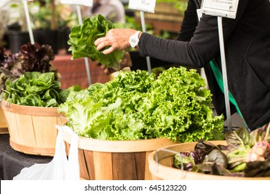 A woman arranges lettuce in wooden baskets at the farmers market in Knoxville Tennessee