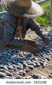 Woman arranging and drying seasoned fish.
