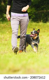 woman with australian cattle dog