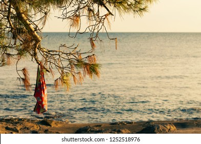 Woman bathing suit hanging on a pine tree branch at the beach in the golden hour at sunset time. Vacation, summer and nudist camp concepts.