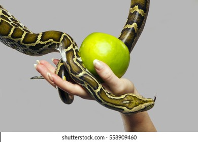 A woman with a beautiful manicure holds a green apple on which a snake descends.