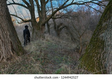 Woman in black walks in the autumn forest among large trees