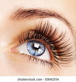Weibliches blaues Auge mit extrem langen Wimpern