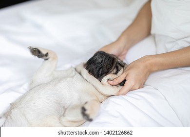 woman body massage and face massage spa to a dog pug breed feeling so comfortable and relaxation,dog sleep and rest with owner,Selective Focus,Spa dog Concept