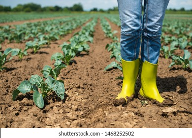Woman with boots on cabbage plantation. Agriculture concept with farmer.