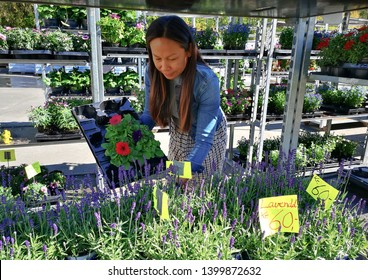 Woman buying flowers in pots at a garden center or the beautiful female customer holding potted plant, flowers plate on her hand in te nice sunny morning in spring time at Arendal norway.