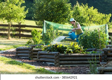 woman with can watering raised vegetable beds with spinach and green peas in countryside summer garden