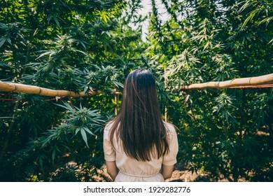 Woman in the Cannabis farm, Girl standing with Marijuana or Hemp green herbal plant.