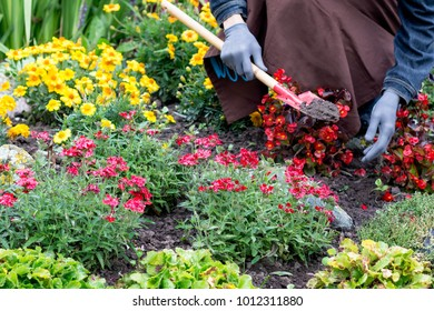 Woman cares about  flowers in the flower garden, horticulture and the flower planting