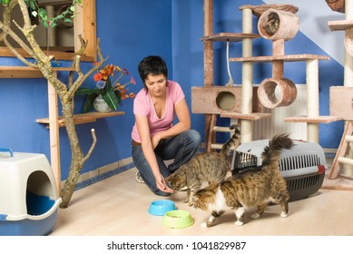 Woman cares cats in the cat hotel