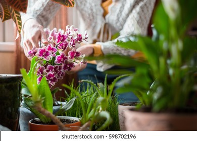Woman cares for indoor flowers orchid, aloe
