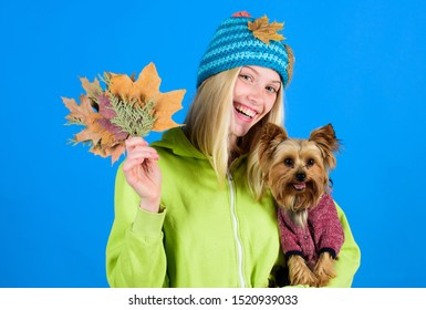 Woman carry yorkshire terrier. Take care pet autumn. Veterinary medicine concept. Health care for dog pet. Pet health tips for autumn. regular flea treatment. Girl hug cute dog and hold fallen leaves.
