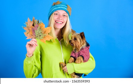 Woman carry yorkshire terrier. Take care pet autumn. Veterinary medicine concept. Health care for dog pet. regular flea treatment. Pet health tips for autumn. Girl hug cute dog and hold fallen leaves.