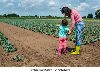 Woman and child on cabbage plantation. Agriculture concept with mother and child farmers.