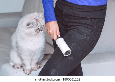 Woman cleaning black clothes with lint roller or sticky roller from grey cats hair. Clothes in pet fur