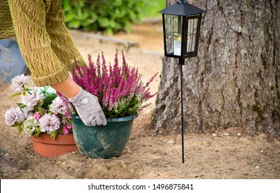 Woman cleaning loved ones grave plot and planting new common heather flowers in a flower pot, maintenance services of a plot in a cemetery concept.