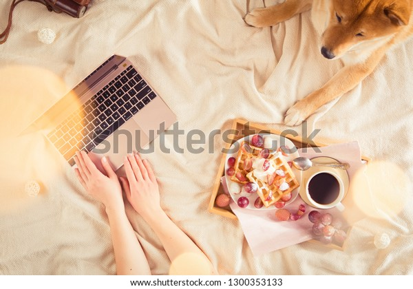 Woman in cozy home relaxing and blogging with sleeping dog Shiba inu, tasty breakfast, using laptop for her blog, top view, flat lay. Soft, comfy flatlay lifestyle.