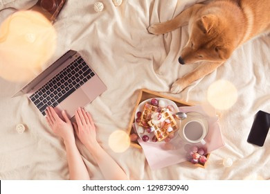 Woman in cozy home relaxing with sleeping dog Shiba inu, tasty breakfast, using laptop, top view, flat lay. Soft, comfy lifestyle.