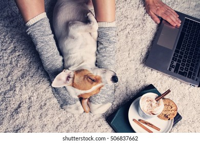 Woman in cozy home wear relaxing at home with sleeping dog Jack Russel terrier, drinking cacao, using laptop, top view. Soft, comfy lifestyle.
