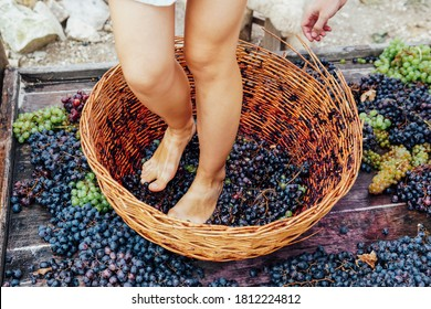 Woman crushes feet of grapes to make wine
