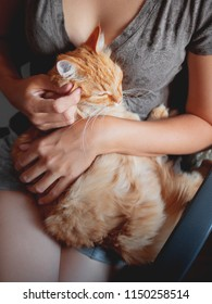 Woman cuddles het cute ginger cat. Fluffy tabby pet looks pleased and sleepy. Cozy home background.