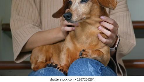 Woman cuddling dachshund dog at home