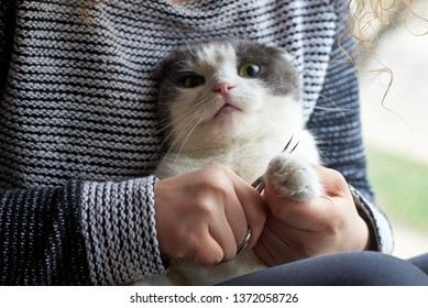 A woman cuts the claws of a cute cat with nail scissors, pet care