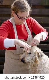 woman cutting dogs fur.