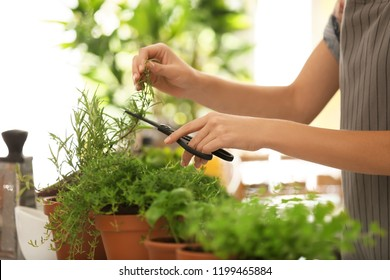 Woman cutting fresh rosemary in kitchen