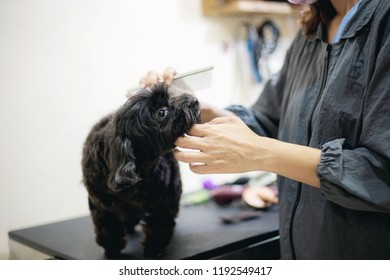 Woman are cutting hair a dog in pet store.
