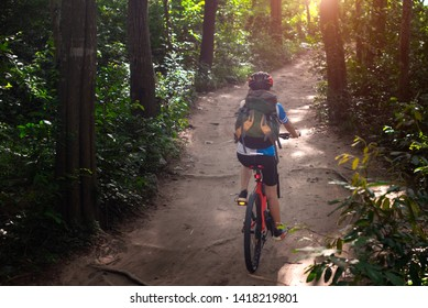 Woman cyclist bicycle riding in way of the rain forest road, adventure woman riding mountain bike alone in forest at countryside